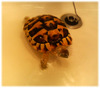 turtle050614